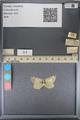 http://mczbase.mcz.harvard.edu/specimen_images/ent-lepidoptera/images/2014_01_16/IMG_153968.JPG