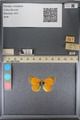 http://mczbase.mcz.harvard.edu/specimen_images/ent-lepidoptera/images/2014_01_16/IMG_153969.JPG