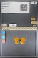 http://mczbase.mcz.harvard.edu/specimen_images/ent-lepidoptera/images/2014_01_16/IMG_153970.JPG