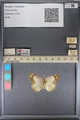 http://mczbase.mcz.harvard.edu/specimen_images/ent-lepidoptera/images/2014_01_16/IMG_153974.JPG