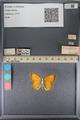 http://mczbase.mcz.harvard.edu/specimen_images/ent-lepidoptera/images/2014_01_16/IMG_153975.JPG