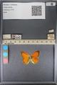 http://mczbase.mcz.harvard.edu/specimen_images/ent-lepidoptera/images/2014_01_16/IMG_153976.JPG