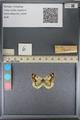 http://mczbase.mcz.harvard.edu/specimen_images/ent-lepidoptera/images/2014_01_16/IMG_153978.JPG
