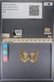 http://mczbase.mcz.harvard.edu/specimen_images/ent-lepidoptera/images/2014_01_16/IMG_153979.JPG
