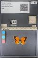 http://mczbase.mcz.harvard.edu/specimen_images/ent-lepidoptera/images/2014_01_16/IMG_153981.JPG