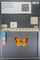 http://mczbase.mcz.harvard.edu/specimen_images/ent-lepidoptera/images/2014_01_16/IMG_153982.JPG