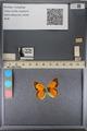 http://mczbase.mcz.harvard.edu/specimen_images/ent-lepidoptera/images/2014_01_16/IMG_153983.JPG