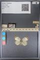 http://mczbase.mcz.harvard.edu/specimen_images/ent-lepidoptera/images/2014_01_16/IMG_153987.JPG