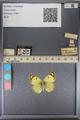 http://mczbase.mcz.harvard.edu/specimen_images/ent-lepidoptera/images/2014_01_16/IMG_153988.JPG