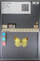 http://mczbase.mcz.harvard.edu/specimen_images/ent-lepidoptera/images/2014_01_16/IMG_153989.JPG