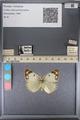 http://mczbase.mcz.harvard.edu/specimen_images/ent-lepidoptera/images/2014_01_16/IMG_153990.JPG