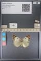 http://mczbase.mcz.harvard.edu/specimen_images/ent-lepidoptera/images/2014_01_16/IMG_153991.JPG