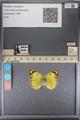 http://mczbase.mcz.harvard.edu/specimen_images/ent-lepidoptera/images/2014_01_16/IMG_153992.JPG