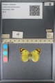 http://mczbase.mcz.harvard.edu/specimen_images/ent-lepidoptera/images/2014_01_16/IMG_153993.JPG