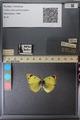 http://mczbase.mcz.harvard.edu/specimen_images/ent-lepidoptera/images/2014_01_16/IMG_153994.JPG