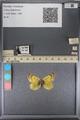 http://mczbase.mcz.harvard.edu/specimen_images/ent-lepidoptera/images/2014_01_16/IMG_153996.JPG