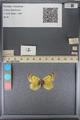 http://mczbase.mcz.harvard.edu/specimen_images/ent-lepidoptera/images/2014_01_16/IMG_153997.JPG