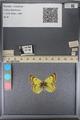 http://mczbase.mcz.harvard.edu/specimen_images/ent-lepidoptera/images/2014_01_16/IMG_153998.JPG