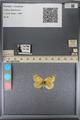 http://mczbase.mcz.harvard.edu/specimen_images/ent-lepidoptera/images/2014_01_16/IMG_154000.JPG
