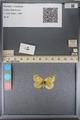 http://mczbase.mcz.harvard.edu/specimen_images/ent-lepidoptera/images/2014_01_16/IMG_154001.JPG