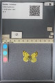 http://mczbase.mcz.harvard.edu/specimen_images/ent-lepidoptera/images/2014_01_16/IMG_154003.JPG