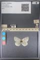 http://mczbase.mcz.harvard.edu/specimen_images/ent-lepidoptera/images/2014_01_16/IMG_154006.JPG