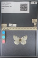 http://mczbase.mcz.harvard.edu/specimen_images/ent-lepidoptera/images/2014_01_16/IMG_154007.JPG