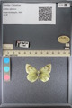 http://mczbase.mcz.harvard.edu/specimen_images/ent-lepidoptera/images/2014_01_16/IMG_154008.JPG