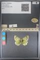 http://mczbase.mcz.harvard.edu/specimen_images/ent-lepidoptera/images/2014_01_16/IMG_154009.JPG