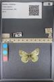 http://mczbase.mcz.harvard.edu/specimen_images/ent-lepidoptera/images/2014_01_16/IMG_154010.JPG