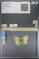 http://mczbase.mcz.harvard.edu/specimen_images/ent-lepidoptera/images/2014_01_16/IMG_154011.JPG