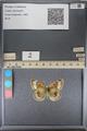 http://mczbase.mcz.harvard.edu/specimen_images/ent-lepidoptera/images/2014_01_16/IMG_154013.JPG