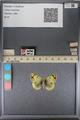 http://mczbase.mcz.harvard.edu/specimen_images/ent-lepidoptera/images/2014_01_16/IMG_154014.JPG