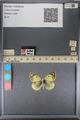 http://mczbase.mcz.harvard.edu/specimen_images/ent-lepidoptera/images/2014_01_16/IMG_154016.JPG
