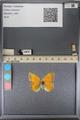 http://mczbase.mcz.harvard.edu/specimen_images/ent-lepidoptera/images/2014_01_16/IMG_154020.JPG