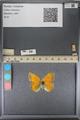 http://mczbase.mcz.harvard.edu/specimen_images/ent-lepidoptera/images/2014_01_16/IMG_154021.JPG