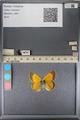 http://mczbase.mcz.harvard.edu/specimen_images/ent-lepidoptera/images/2014_01_16/IMG_154022.JPG