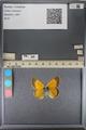 http://mczbase.mcz.harvard.edu/specimen_images/ent-lepidoptera/images/2014_01_16/IMG_154023.JPG