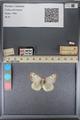 http://mczbase.mcz.harvard.edu/specimen_images/ent-lepidoptera/images/2014_01_16/IMG_154024.JPG