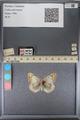 http://mczbase.mcz.harvard.edu/specimen_images/ent-lepidoptera/images/2014_01_16/IMG_154025.JPG