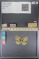 http://mczbase.mcz.harvard.edu/specimen_images/ent-lepidoptera/images/2014_01_16/IMG_154026.JPG