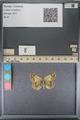 http://mczbase.mcz.harvard.edu/specimen_images/ent-lepidoptera/images/2014_01_16/IMG_154029.JPG
