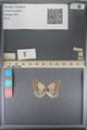 http://mczbase.mcz.harvard.edu/specimen_images/ent-lepidoptera/images/2014_01_16/IMG_154031.JPG