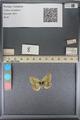 http://mczbase.mcz.harvard.edu/specimen_images/ent-lepidoptera/images/2014_01_16/IMG_154033.JPG