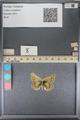http://mczbase.mcz.harvard.edu/specimen_images/ent-lepidoptera/images/2014_01_16/IMG_154035.JPG