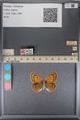 http://mczbase.mcz.harvard.edu/specimen_images/ent-lepidoptera/images/2014_01_16/IMG_154037.JPG