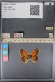 http://mczbase.mcz.harvard.edu/specimen_images/ent-lepidoptera/images/2014_01_16/IMG_154039.JPG