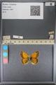 http://mczbase.mcz.harvard.edu/specimen_images/ent-lepidoptera/images/2014_01_16/IMG_154041.JPG