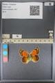 http://mczbase.mcz.harvard.edu/specimen_images/ent-lepidoptera/images/2014_01_16/IMG_154045.JPG