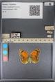 http://mczbase.mcz.harvard.edu/specimen_images/ent-lepidoptera/images/2014_01_16/IMG_154046.JPG